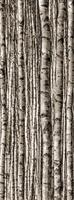 Настенный декор Birch 898 x 2398 mm
