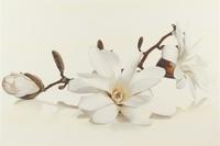 Настенный декор Flora Magnolia 300 x 450 mm