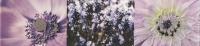 Настенный бордюр Maxima violet 2 448x100 / 8mm