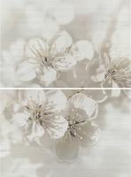 Mirta цветы